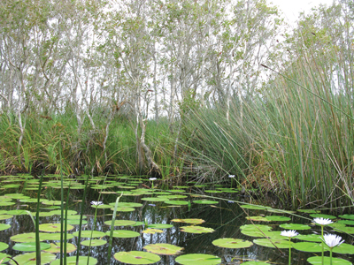 A comprehensive wetlands compliance solution relies heavily on technology and early teaming with local, regional, and governmental stakeholders, GIS and database technologies, and risk management methodologies.